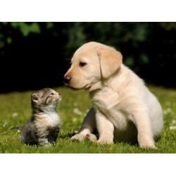 Vendere tutto per ANIMALI con la multicanalità nel negozio e sul web