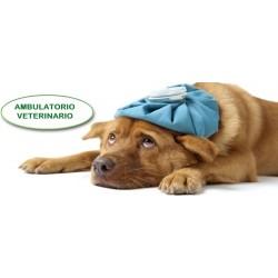 Veterinario - Come posso portare i Clienti nel mio ambulatorio veterinario - clinica veterinaria ? Infoprodotto
