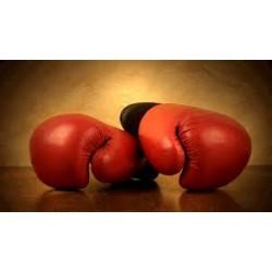 www.boxelazio.it
