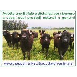 Fattorie che offrono le Bufale da latte in adozione